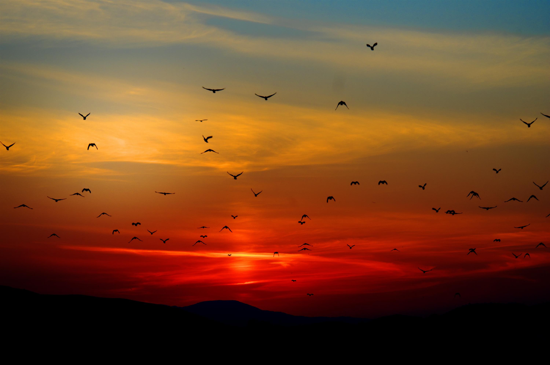 Hope's Dawn
